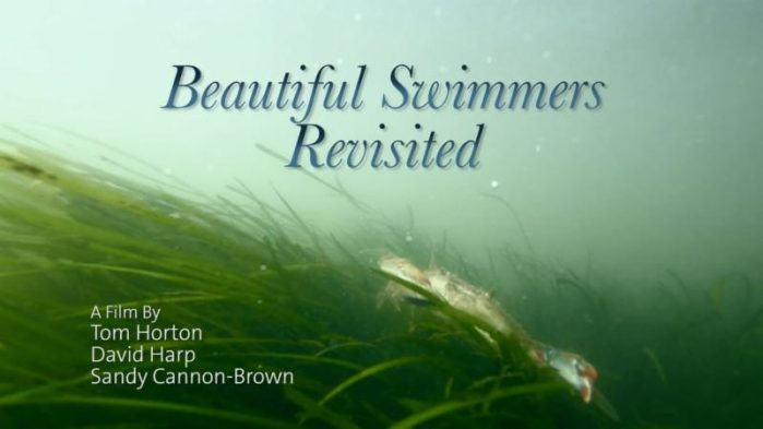 Beautiful Swimmers Revisited